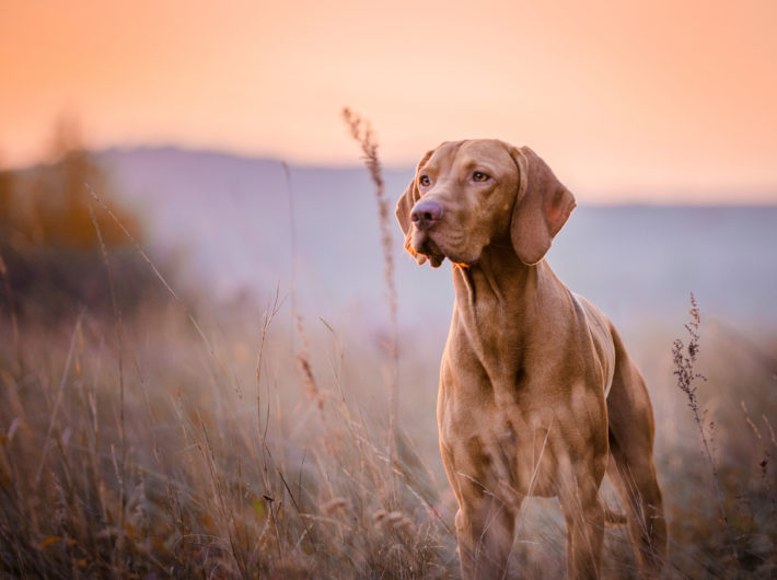 Sporting Dog Health In The Field